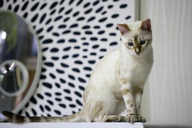 silver-bengal-cat-names