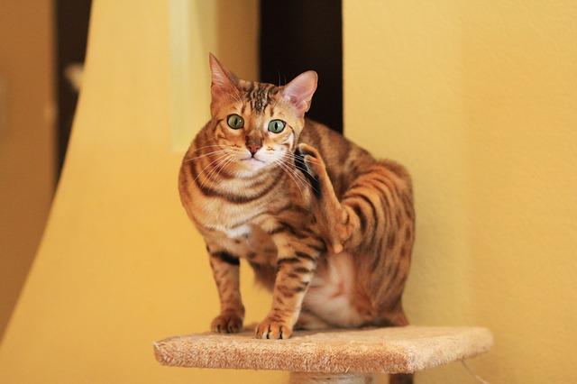 cool-bengal-cat-names