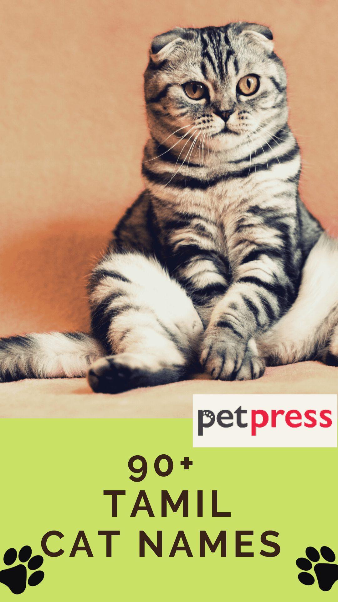 tamil-cat-names
