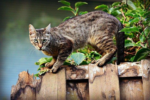 male-tamil-cat-names