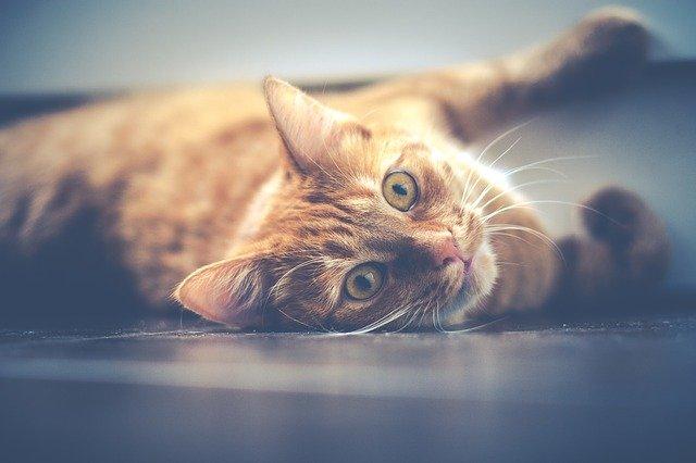female-tamil-cat-names