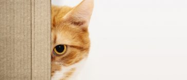 15 Interesting Cat Facts that you need to know