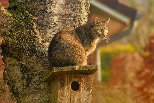 male-marathi-cat-names