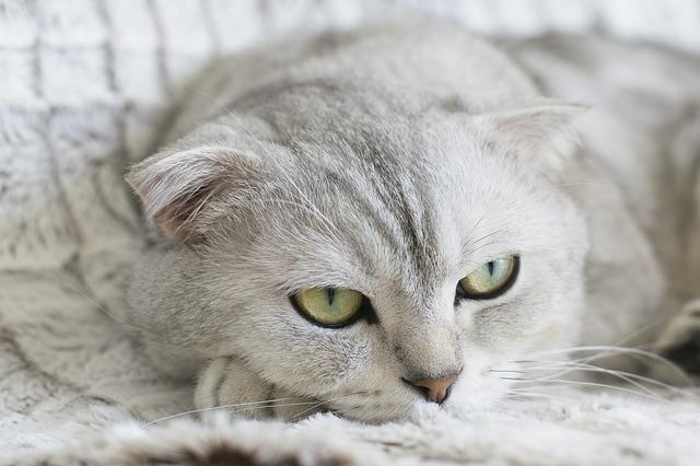 unisex-telugu-cat-names
