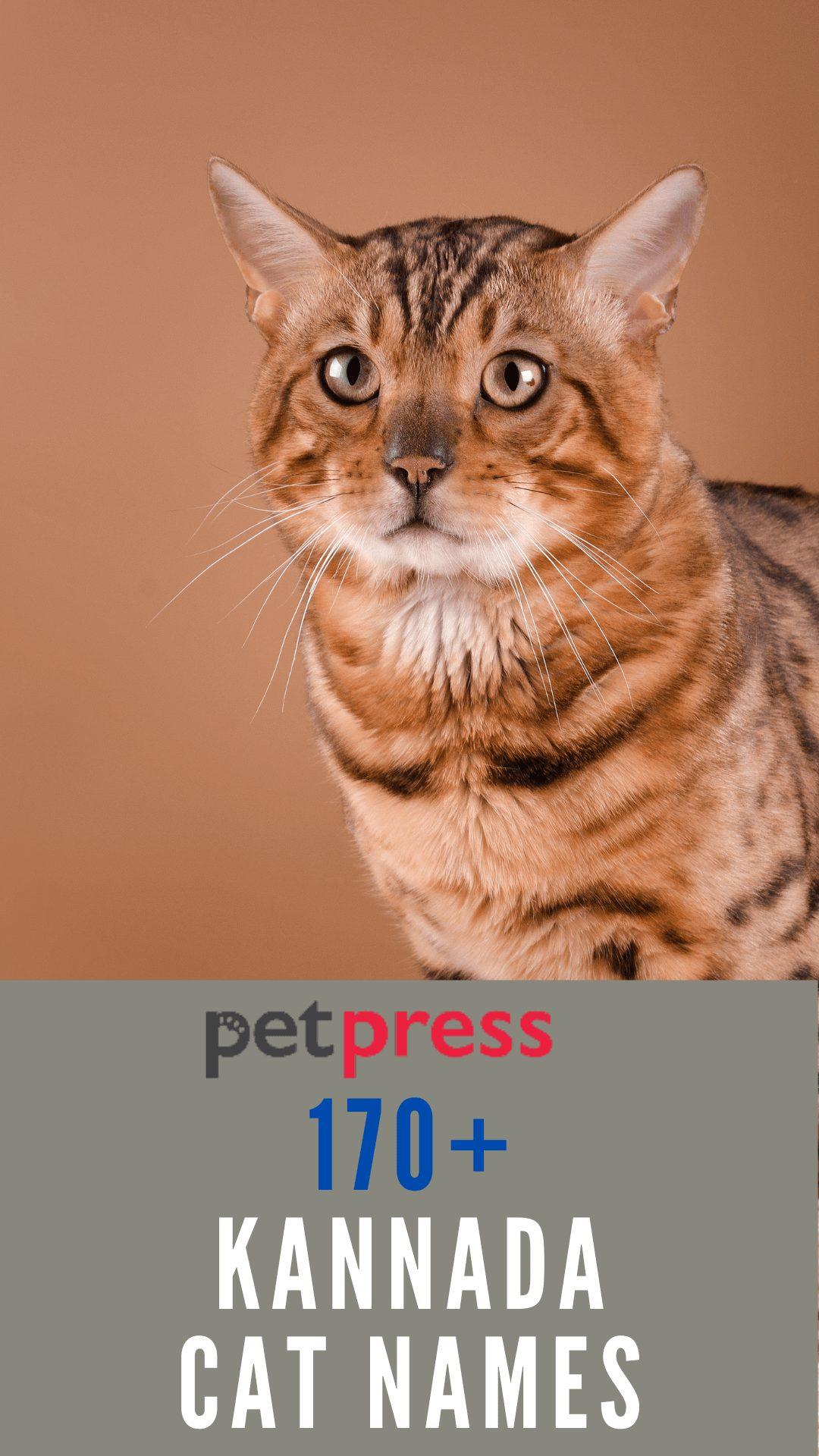 kannada-cat-names
