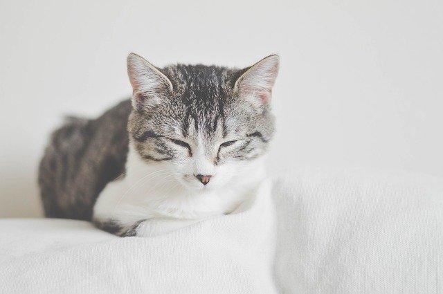 unisex-kannada-cat-names