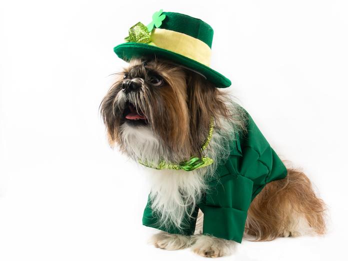 gaelic dog names