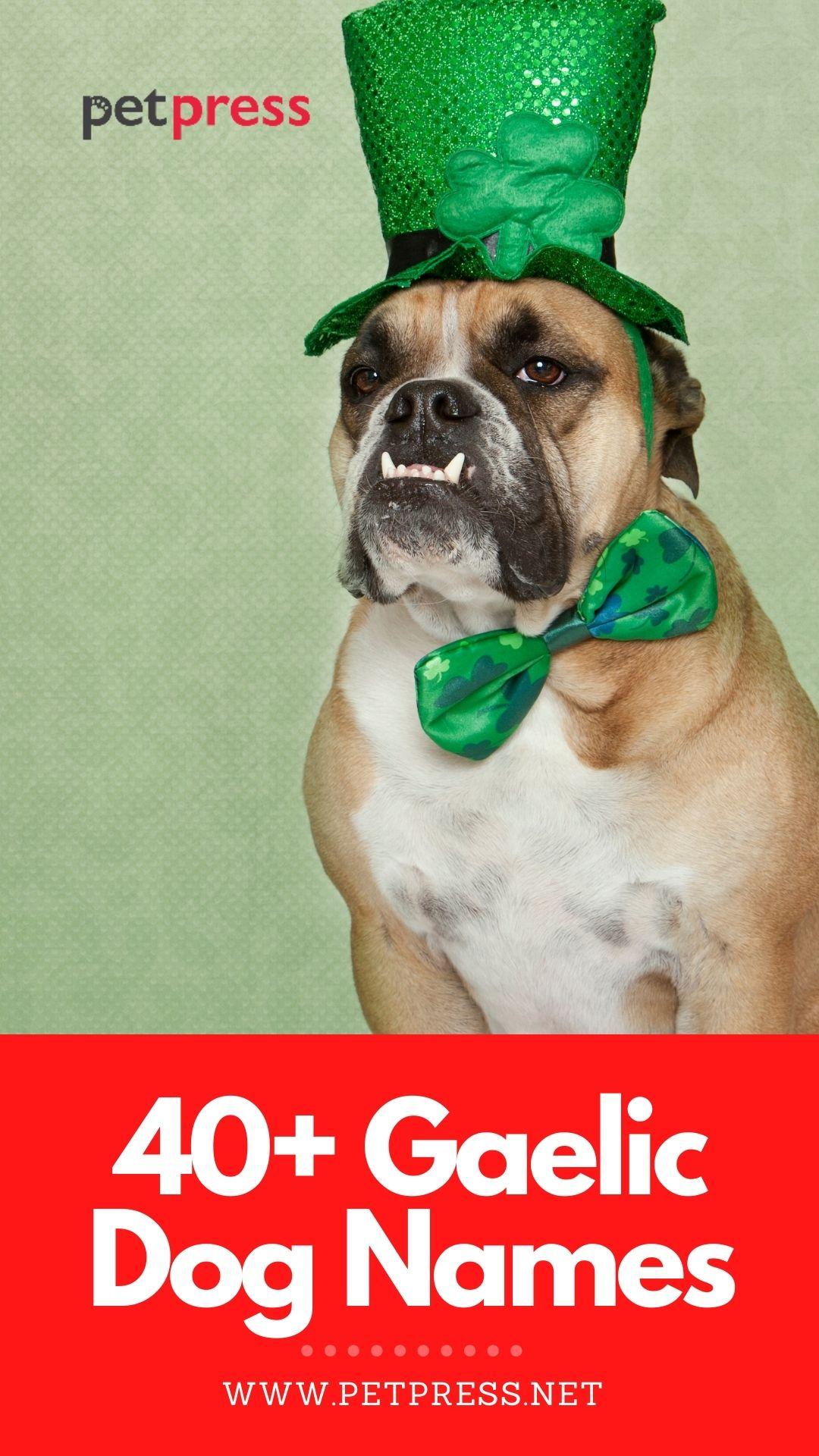 gaelic dog names for naming a dog