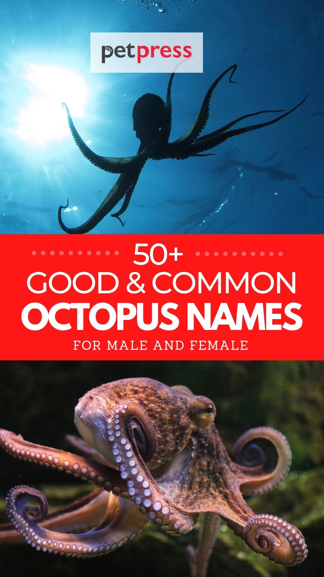 good and common octopus names
