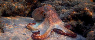 cute octopus names 2