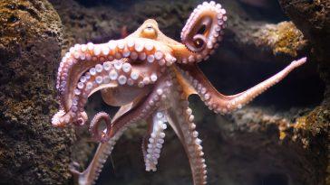 good octopus names