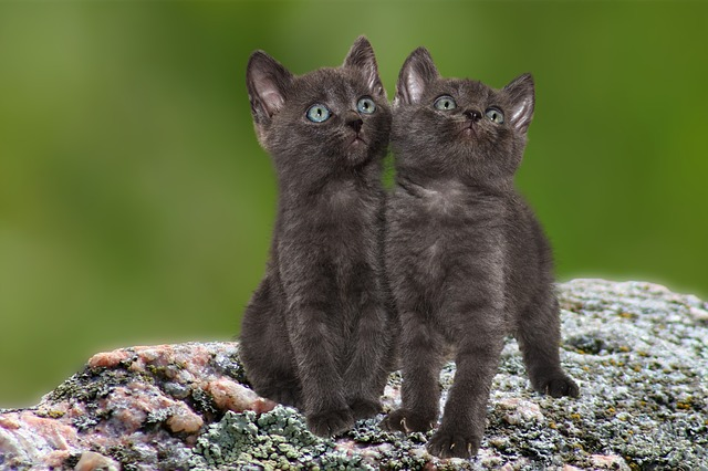 indian-twin-sister-cat-names