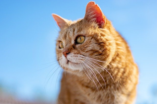 female-hindi-cat-names