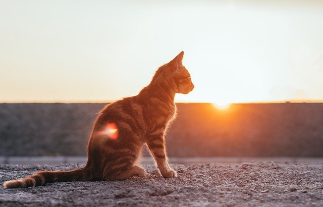 male-hindi-cat-names