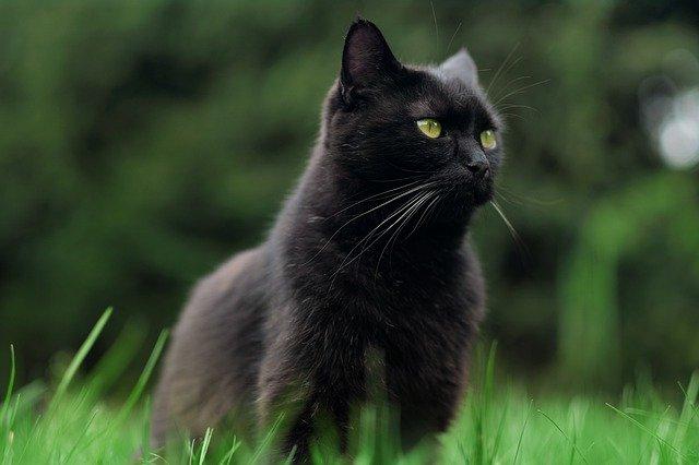 unisex-hindi-cat-names