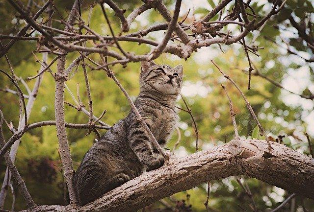 male-punjabi-cat-names