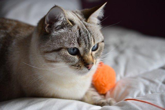 female-punjabi-cat-names
