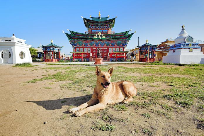 buddhist dog names 1