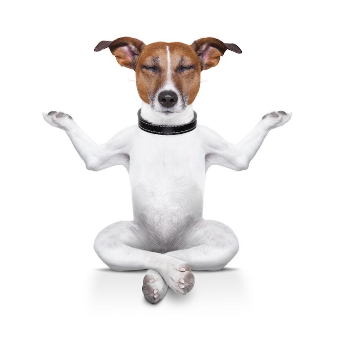 buddhist dog names 2