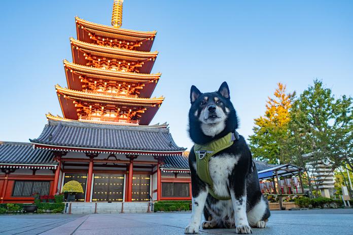 zen dog names for naming your dog 3