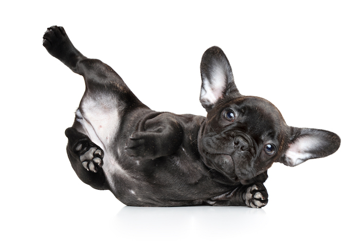 yoga dog names 3