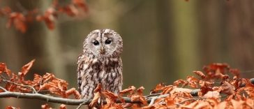 baby owl names for naming an owlet