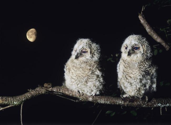 baby owl names 2