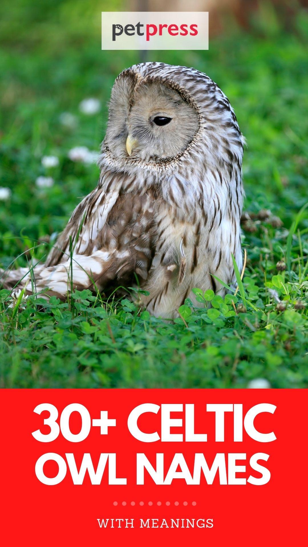 celtic owl names for naming an owl