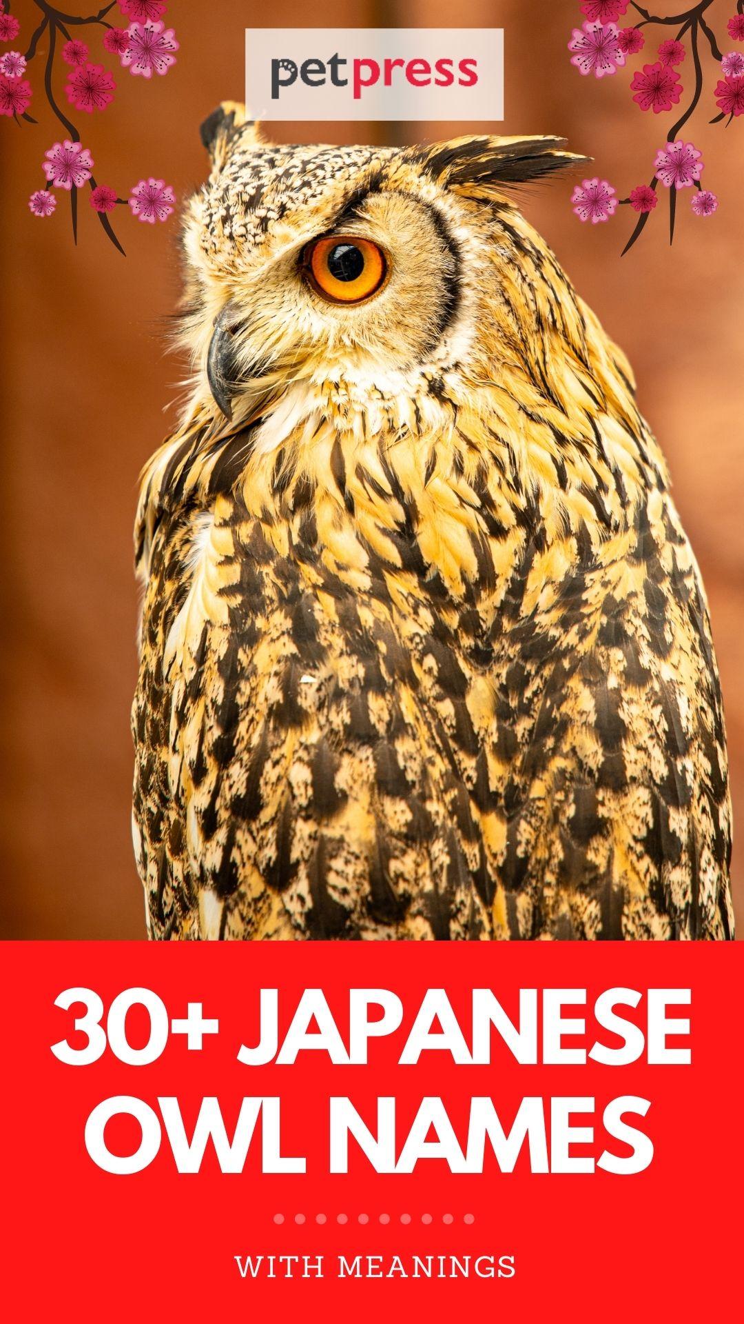 japanese owl names for naming an owl
