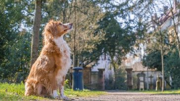 male-urdu-dog-names
