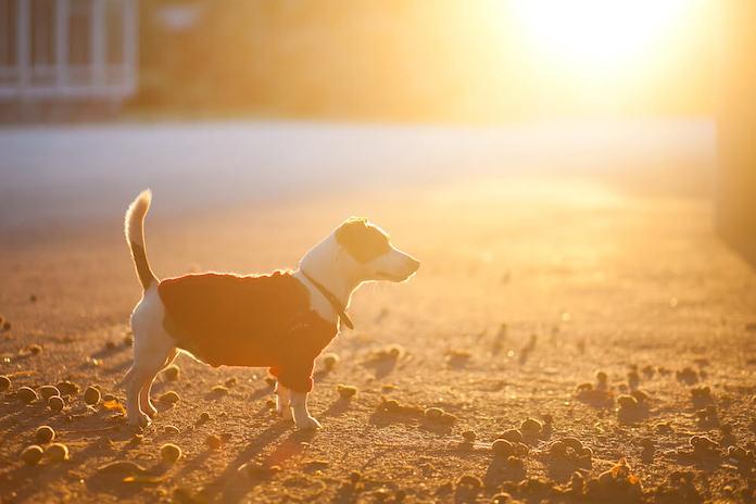 sun based dog names