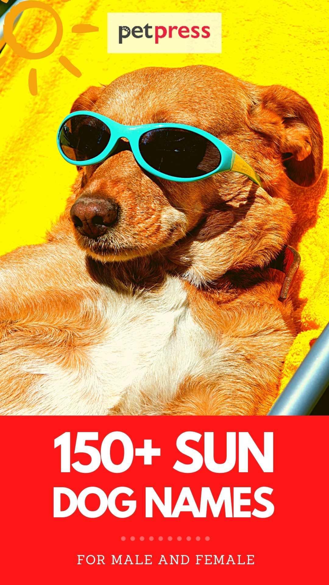 sun dog names for naming a dog