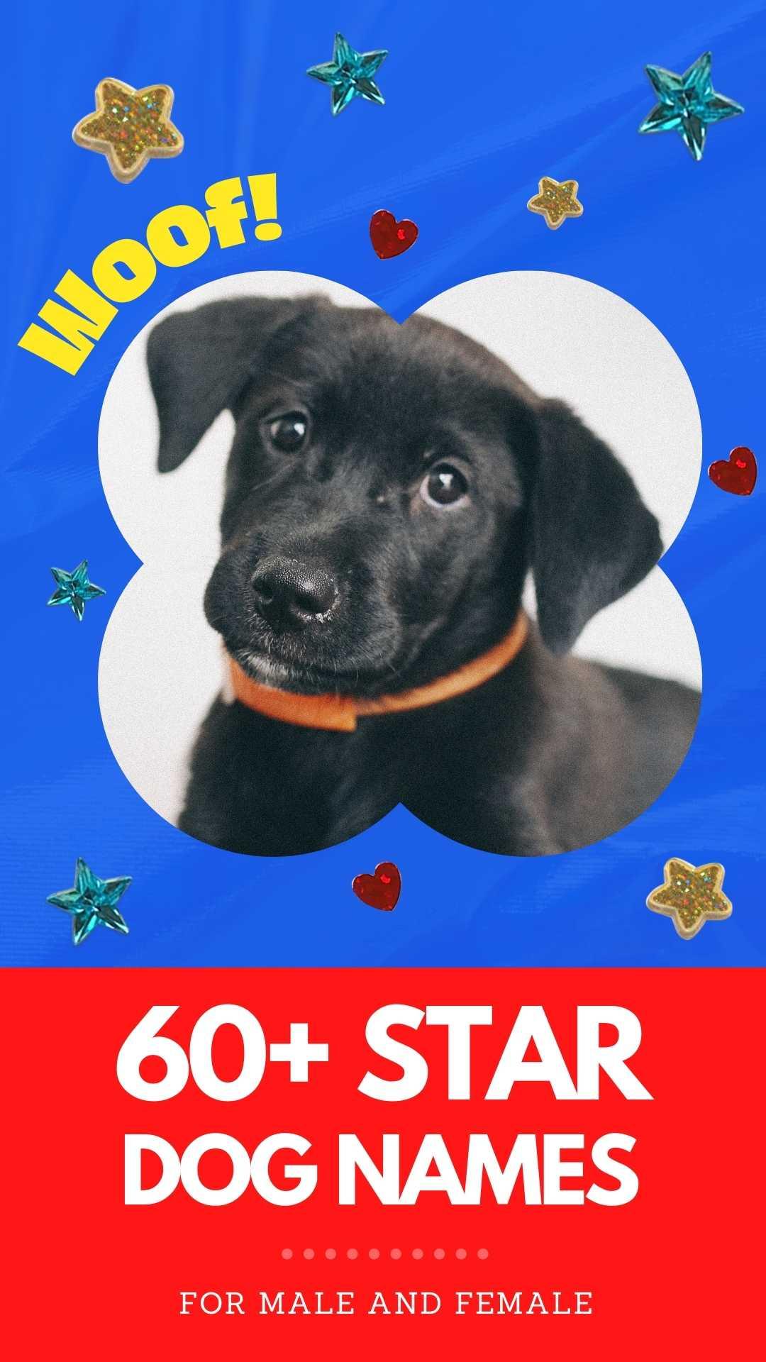 star dog names for naming a dog