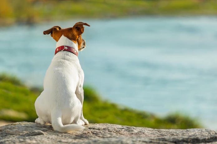 ocean dog names for naming a pup