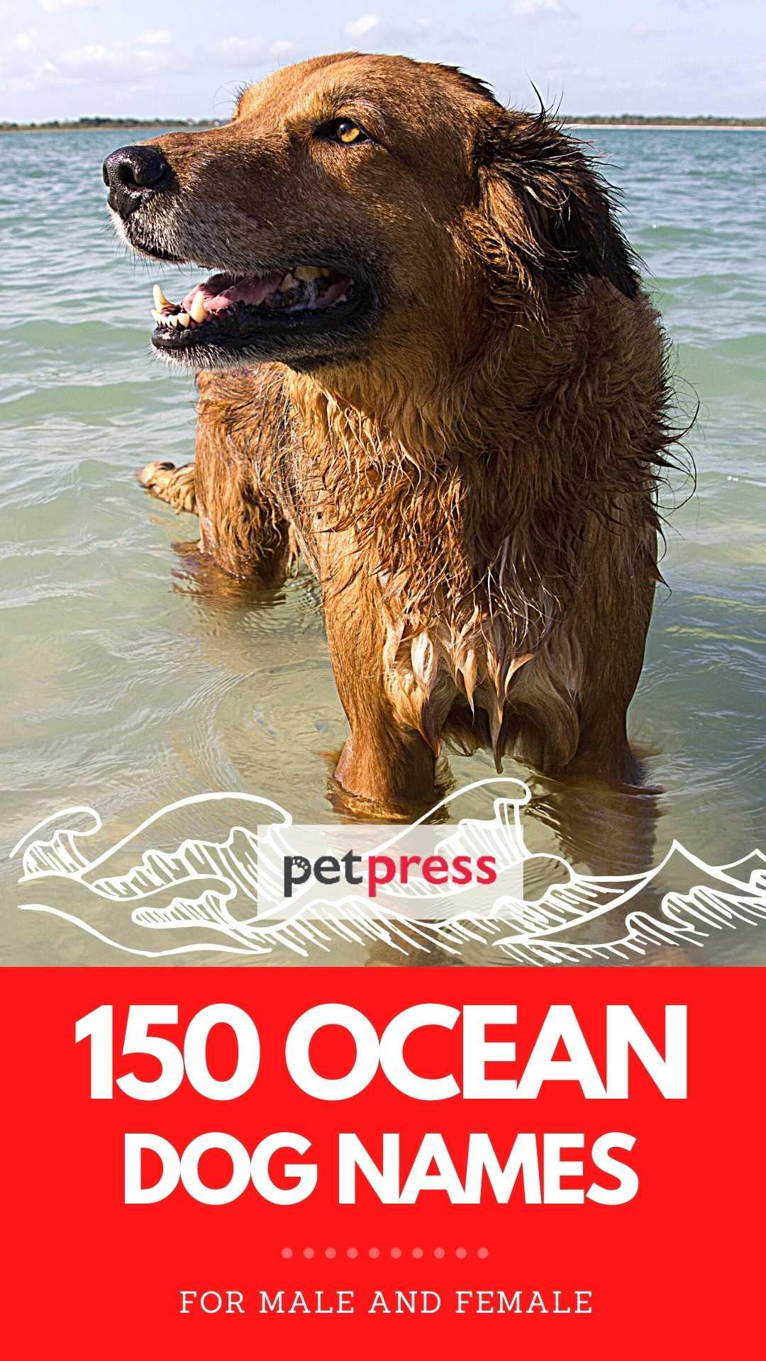 ocean based dog names