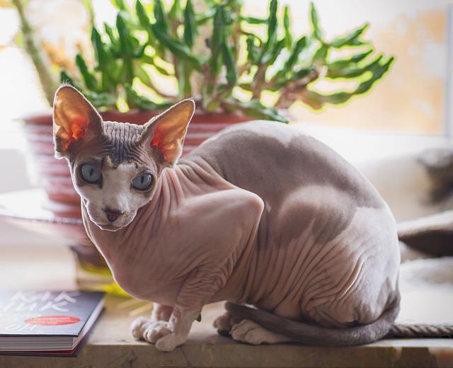 funny-female-sphynx-cat-names