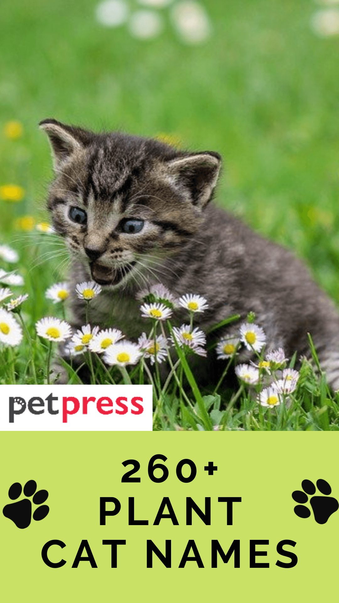 plant-cat-names