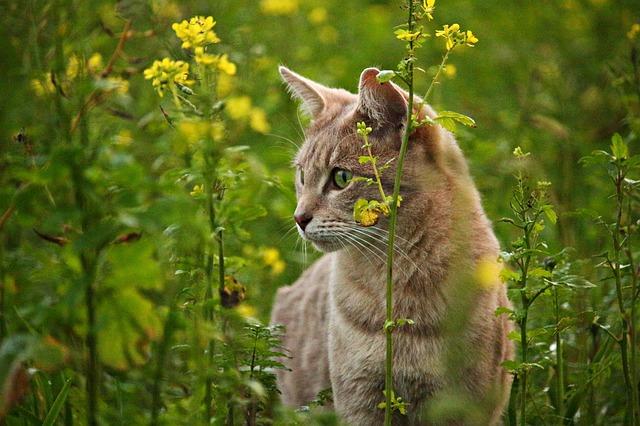 plant-male-cat-names