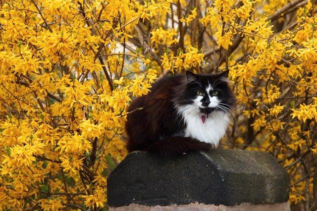 plant-male-cat
