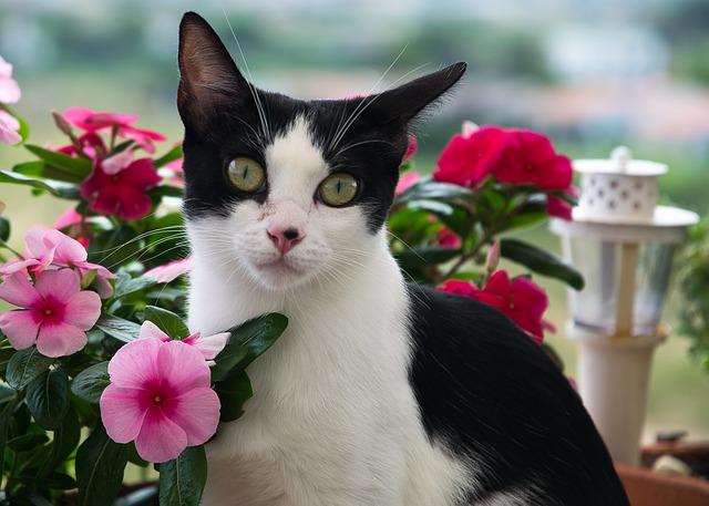 plant-female-cat-names