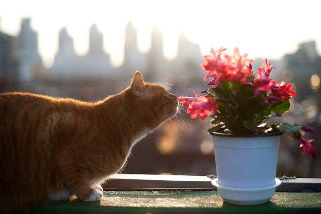 plant-female-cat