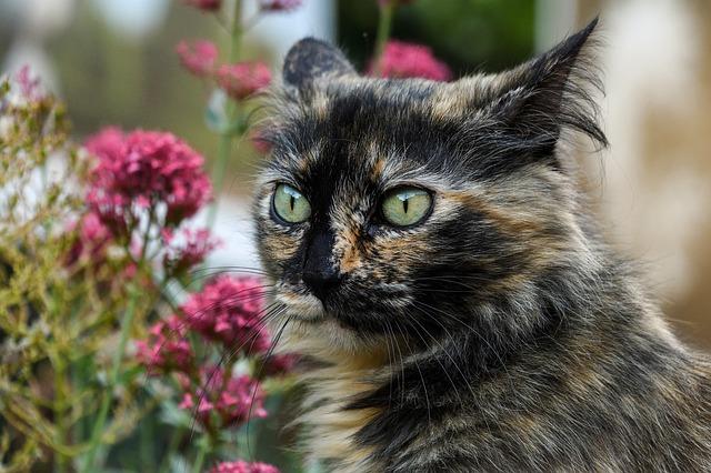 plant-unisex-cat-names