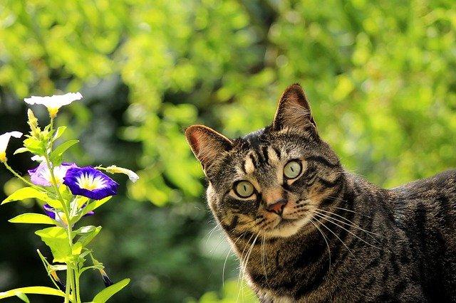 plant-unisex-cat