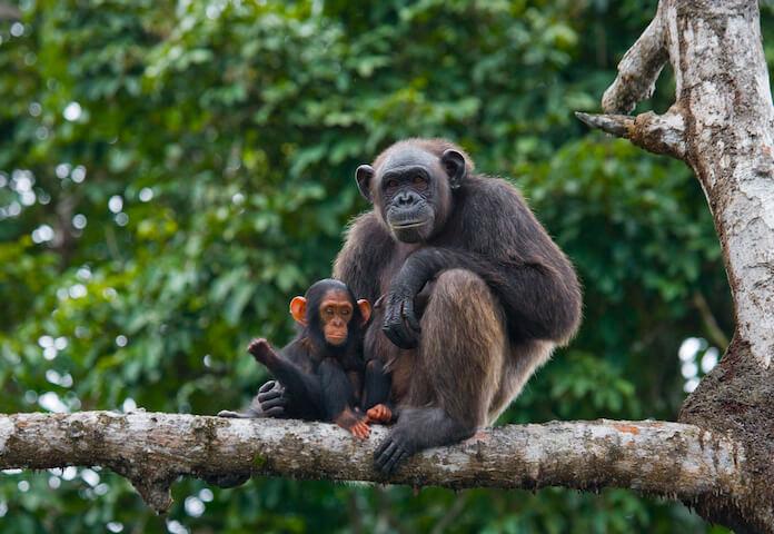 good ape names