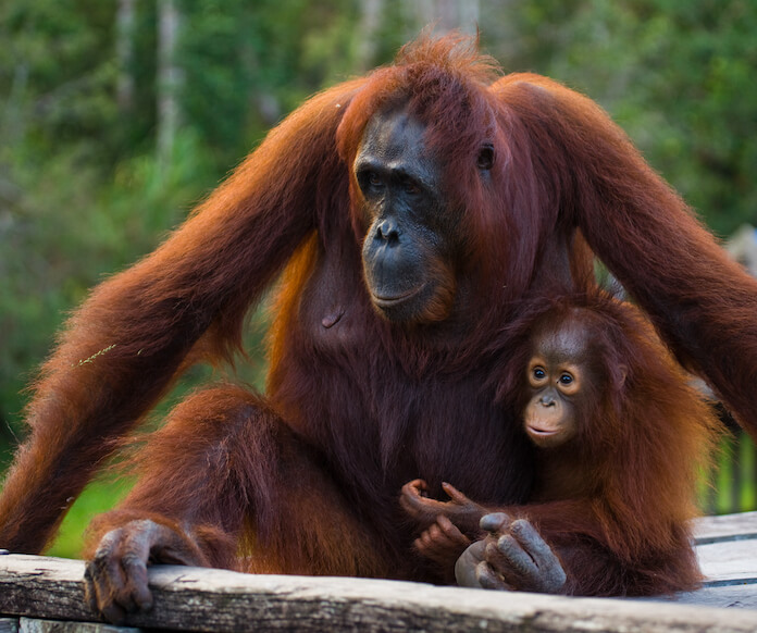 female ape names for naming an ape