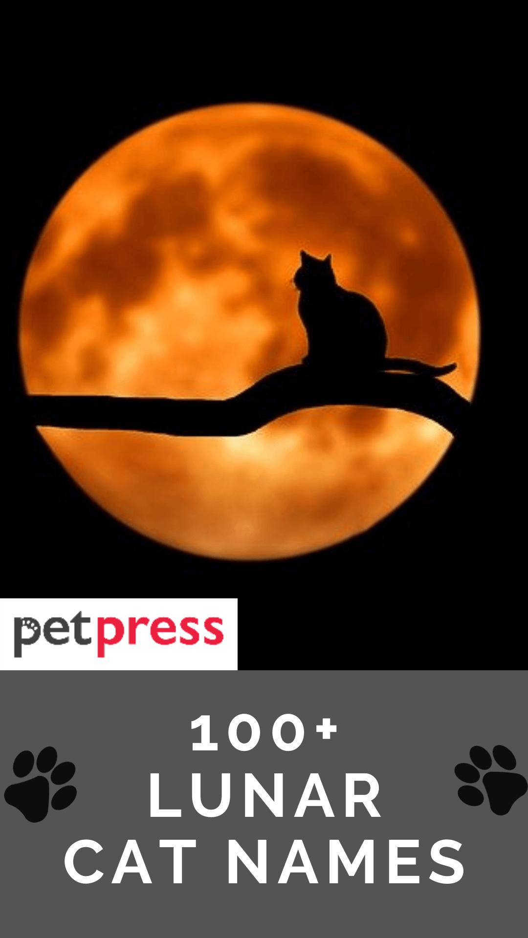 lunar-cat-names