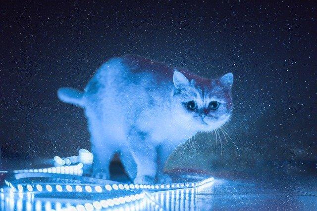 female-lunar-cat-names