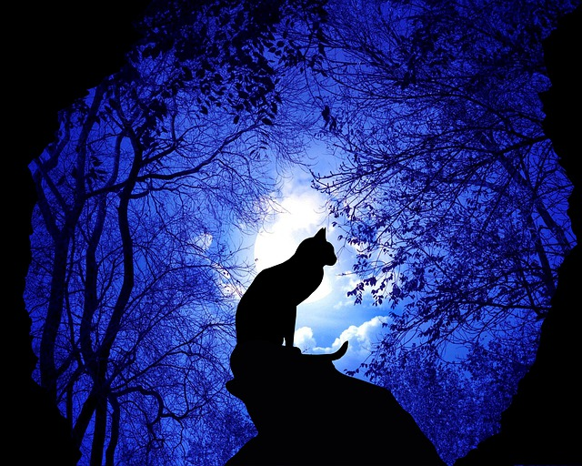 unisex-lunar-cat-names