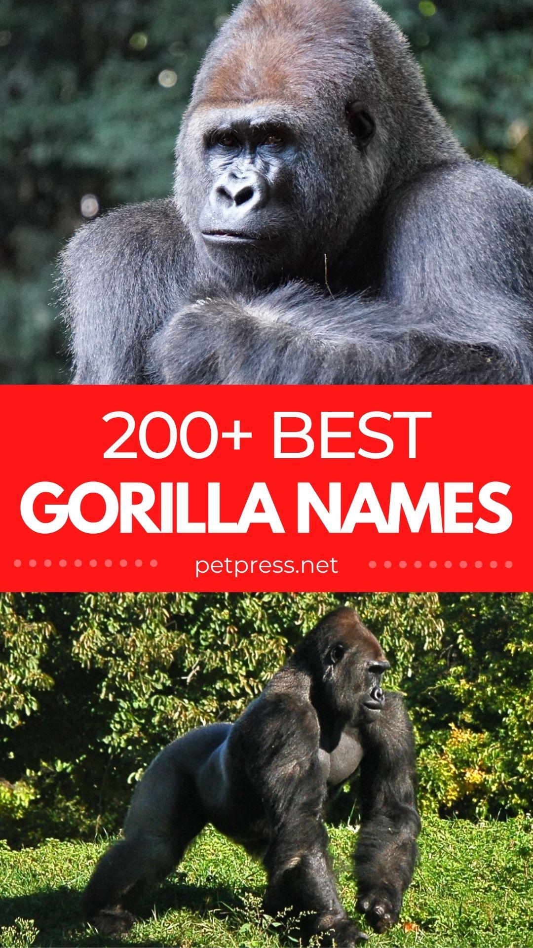 gorilla names for naming a gorilla