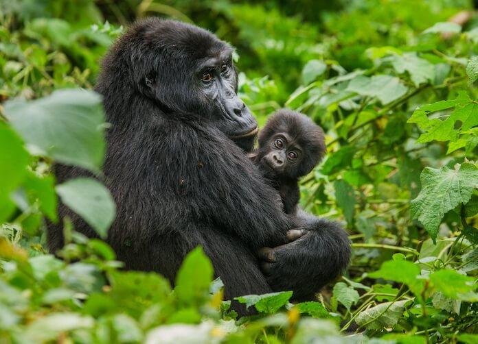 african gorilla names